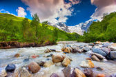 Beautiful landscape with mountain stream.  — Stock Photo