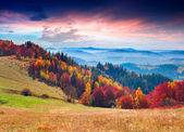 Colorful autumn morning in the mountains — Stock Photo