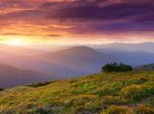 山の中の美しい夏の風景. — ストック写真