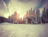 Colorful winter morning in the mountain forest.  — ストック写真