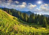 Пейзаж в горах с розовыми цветами — Стоковое фото
