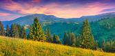 山の夏の風景 — ストック写真