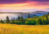 Foggy morning in the Carpathian mountains. — Stock Photo