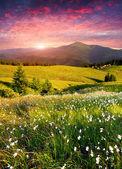 山の夏の日の出 — ストック写真