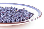 Bluberries — Stock Photo