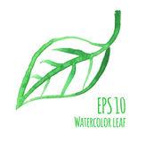 Watercolor leaf — Stock Vector