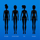 Body types. — Stock Vector