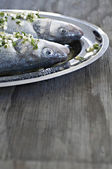 Fresh sea bass — Stock Photo