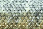 Mitchells rattlesnake scales (crotalus mitchellii) — Stock Photo