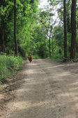 The monk on pilgrimage — Stockfoto