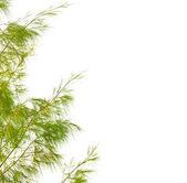 Groene bladeren geïsoleerd op witte achtergrond — Stockfoto