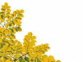 Foglie verdi isolate su sfondo bianco — Foto Stock