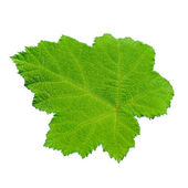 Green leaves isolated on white background — Stockfoto