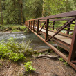Nature Bridge near Marymere Falls, Olympic National Park — Stock Photo #51786651