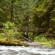 Nature Bridge near Marymere Falls, Olympic National Park — Stock Photo #51786687