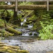 Nature Bridge near Marymere Falls, Olympic National Park — Stock Photo #51787257