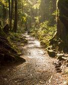 Rainforest Path — Stock Photo