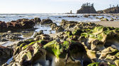 Seastack Sanctuary and Hollow Green Weed at Low Tide Second Beach Olympic National Park — Stock Photo