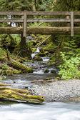 Nature Bridge near Marymere Falls, Olympic National Park — Stock Photo