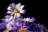Flowers on the dark background — Stock Photo