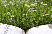 Reading on a meadow A — Stock Photo