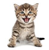 Szép aranyos kis cica meowing, és mosolyogva