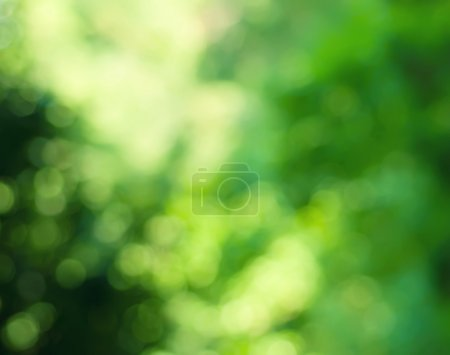 Image-id B32655091