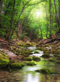 River deep in mountain forest