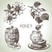 Sada medu. ručně tažené vinobraní ilustrace