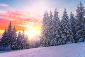 Zimní krajina na západ slunce. Bulharsko