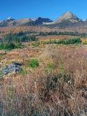 Storm damaged landscape in High Tatras