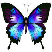 Isolated Butterfly Vector Illustratio