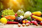 Frisches Bio-Gemüse und Früchte