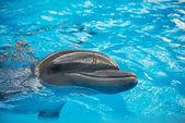 Dolphin in basin of oceanarium