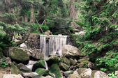 Mountain waterfall in the green wild forest