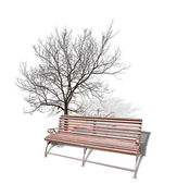 Bare tree near brown bench