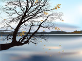 Autumn tree near lake illustration