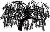 Willow silhouette isolated on white