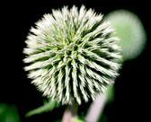 Chiudere il colpo della pianta spinosa in natura