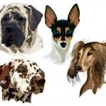 Постер, плакат: Four different breeds of dog muzzles