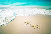 Starfish on a beach sand. Vintage retro style