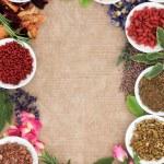 Постер, плакат: Medicinal and Magical herbs