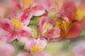 Květy růžové jablko