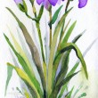 Постер, плакат: Watercolor landscape Lush purple irises in the park