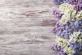 Lila Blumen auf Holz Hintergrund blühen Zweig auf Vintage Holz Textur