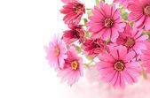 Rózsaszín virágok fehér háttér előtt