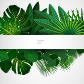 Tropické listy. květinový design pozadí