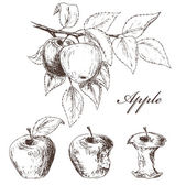 Apples set Fruits sketch collection Process from the whole apple to apple cores