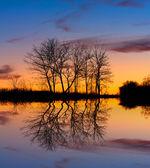 Trees near lake in dusk