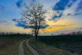 Alone tree near dirt road